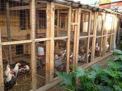 Вольер для куриц своими руками: как выбрать место и определить площадь, как построить правильно? selo.guru — интернет портал о сельском хозяйстве
