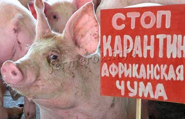 «вирус ходит рядом». как обезопасить хозяйство от африканской чумы свиней?