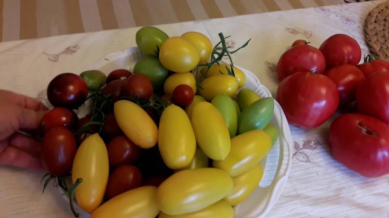Томат паленка отзывы фото урожайность