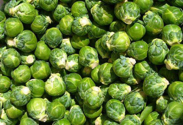 Польза и вред белокочанной капусты для здоровья человека, противопоказания