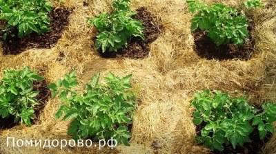 Мульчирование почвы - что это такое и как это правильно делать