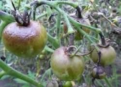 Обработка сада медным купоросом весной и осенью: как разводить (пропорции) и применять