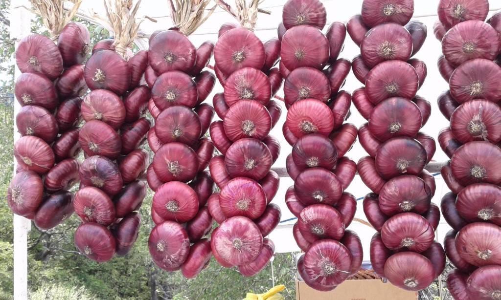 Лук ялтинский: описание сорта, технология выращивания