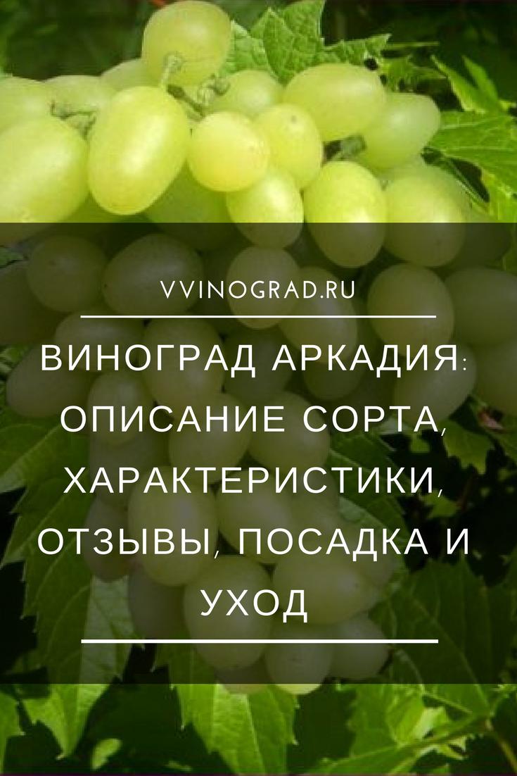 Виноград аркадия - описание, посадка и уход, фото и видео, обрезка