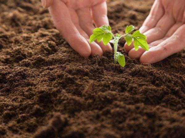 Нитроаммофоска удобрение: применение в саду и огороде
