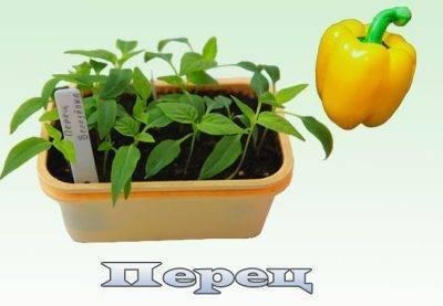 Какая минимальная температура для томатов и перцев, в плёночной теплице? имеется ввиду... - животные и растения - вопросы и ответы