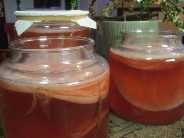 Чайный гриб: полезные свойства и противопоказания для женщин и мужчин