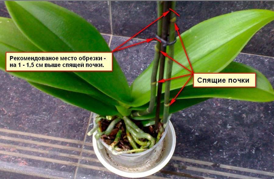 Полноценные уход и выращивание орхидей в домашних условиях