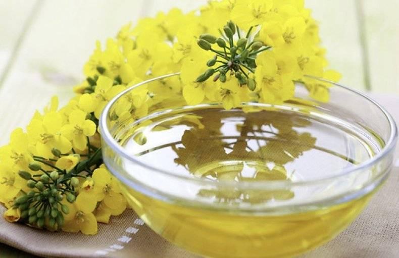 Масло рыжиковое: польза, вред и свойства   food and health