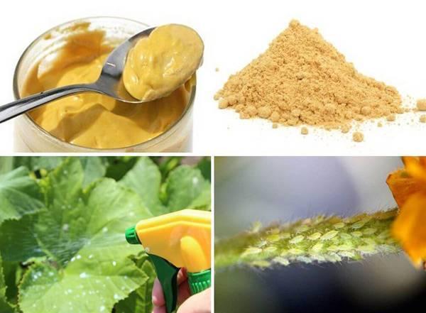 Помогает ли горчица от личинок колорадского жука? - огород, сад, балкон - медиаплатформа миртесен