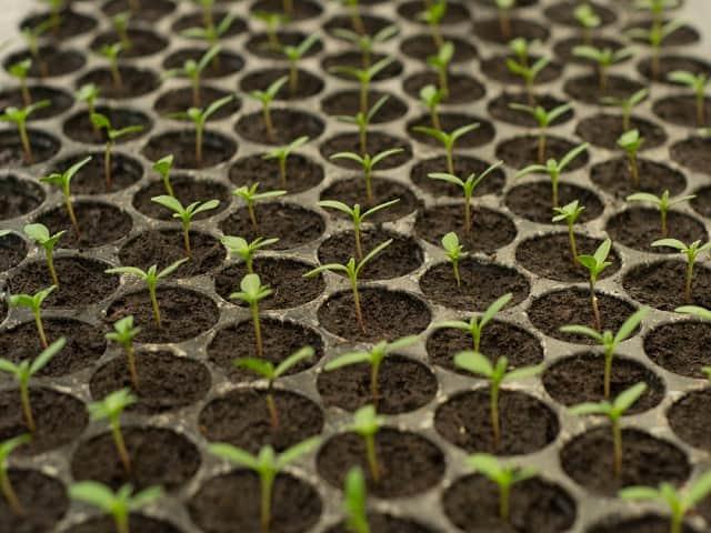 Стимуляторы роста растений: натуральные удобрения и препараты