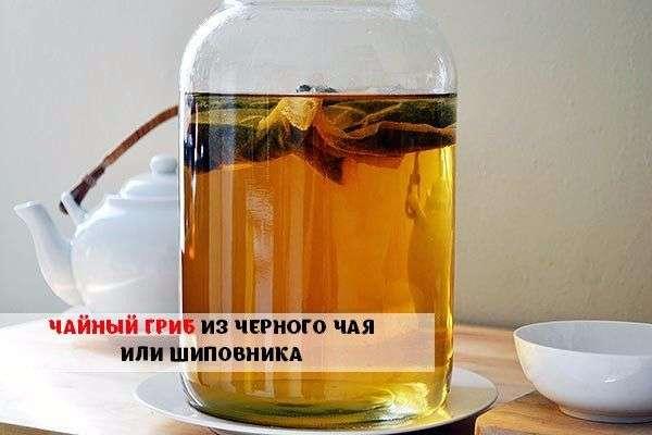 Чайный гриб: как вырастить с нуля пошагово в домашних условиях