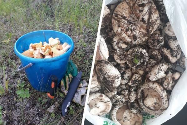Грузди – царские грибы русского застолья