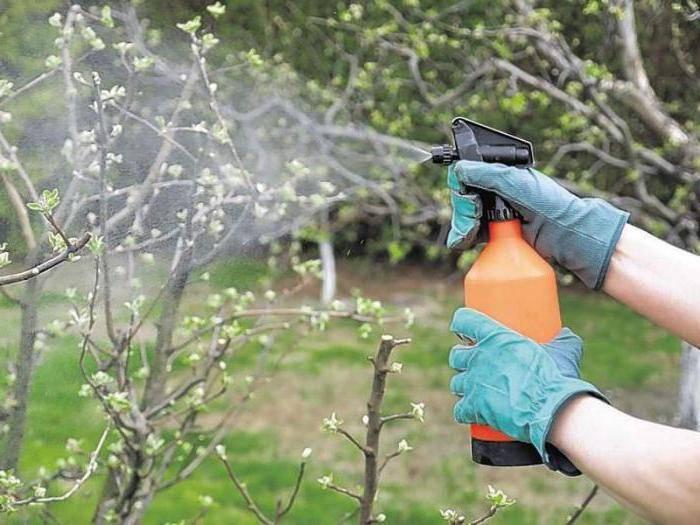 Лучшие средства для весенней обработки яблонь
