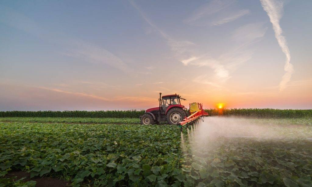 Как и чем подкармливать огурцы для получения хорошего урожая