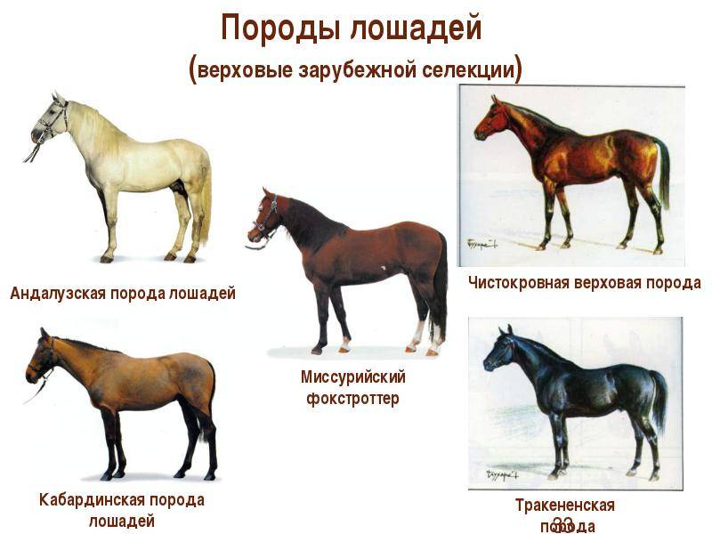 Фелл пони: описание и фото породы | мои лошадки