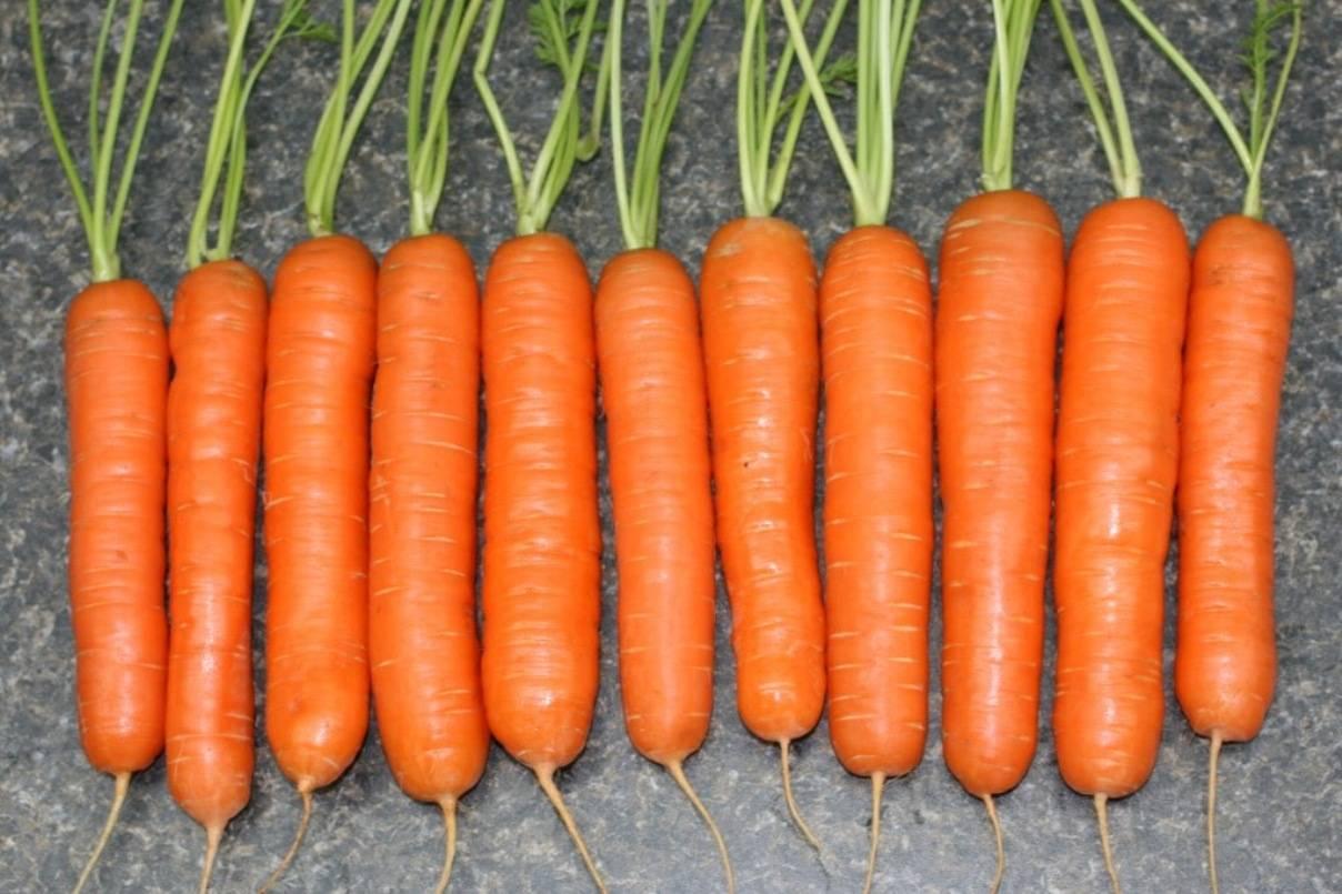 Реферат «морковь – культурное растение»