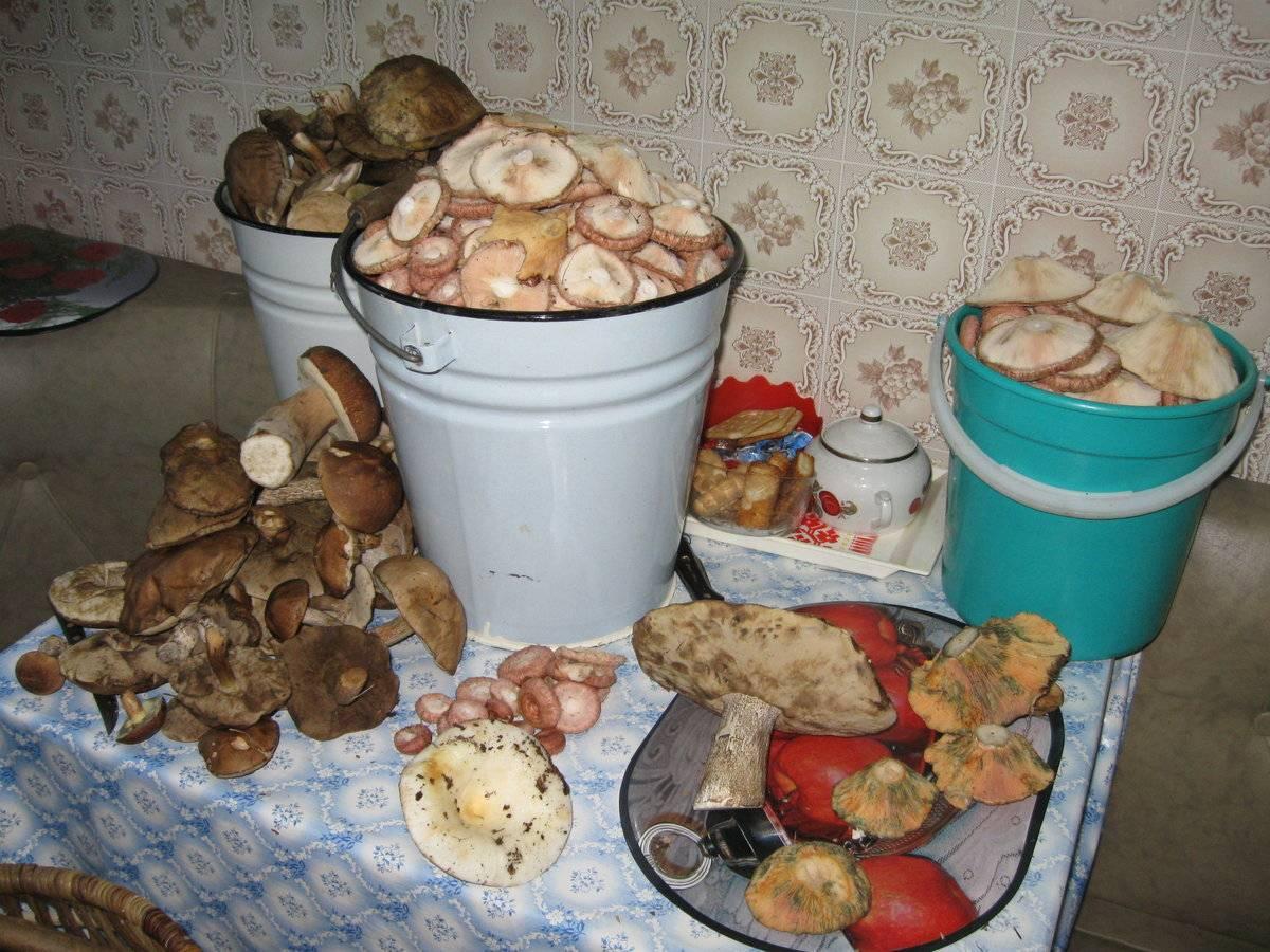 Грибы волгоградской области 2021: когда и где собирать, сезоны и грибные места
