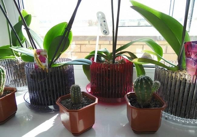 Выбор горшка для орхидей, какой лучше: двойной, прозрачный, керамический, кашпо