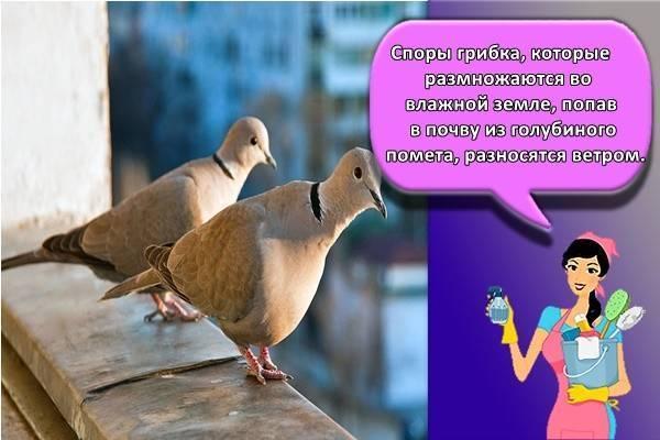 Как избавиться от голубей на балконе, подоконнике, карнизе: инструкция