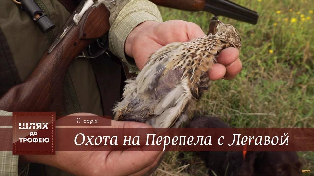 Крымский охотник - охотничий блог - перепел