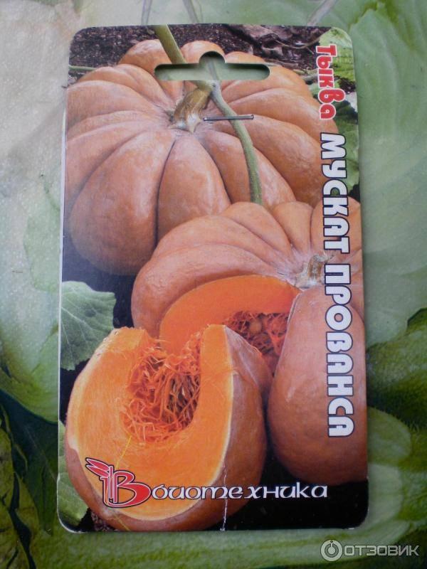 Выбор сорта и особенности выращивания мускатной тыквы сорта мускат де прованс