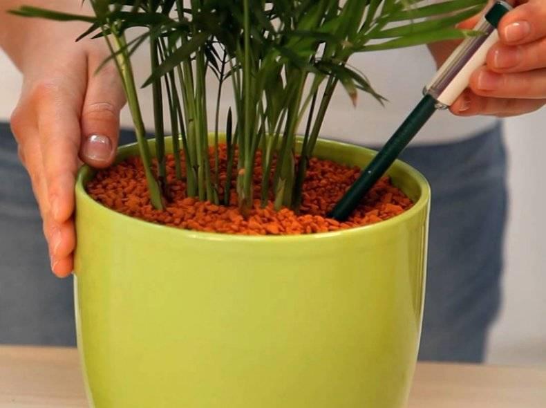 Серамис для орхидей — состав, преимущества и недостатки, хранение и повторное использование + пошаговая посадка и уход