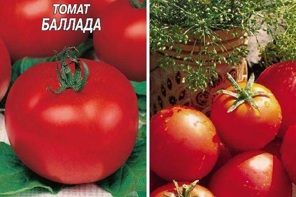Сорт томатов Персик — описание и технология выращивания