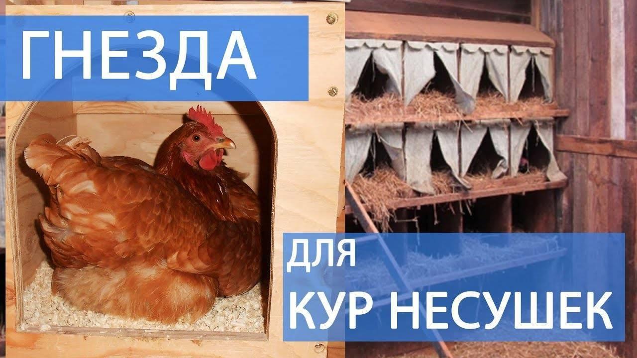Гнезда для кур несушек своими руками - 115 фото лучших решений и конструкций для несушек