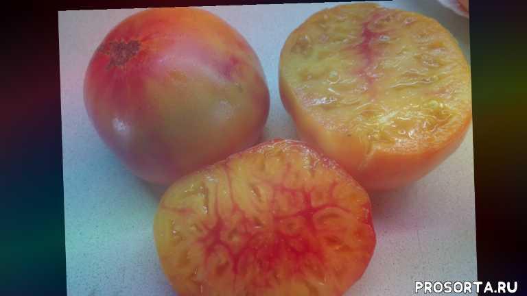 Помидоры медовый салют: описание сорта, характеристики томата, выращивание, фото и видео
