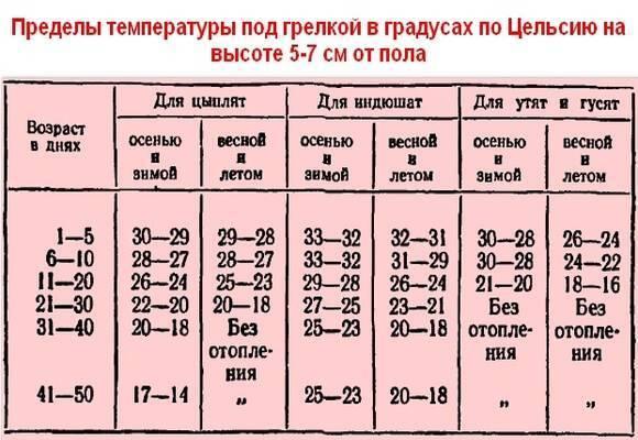 Таблица температурного режима для бройлеров, содержание месячных цыплят