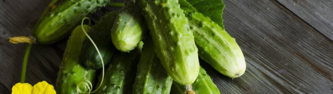 Чем подкармливать огурцы — в открытом грунте, после высадки и когда?