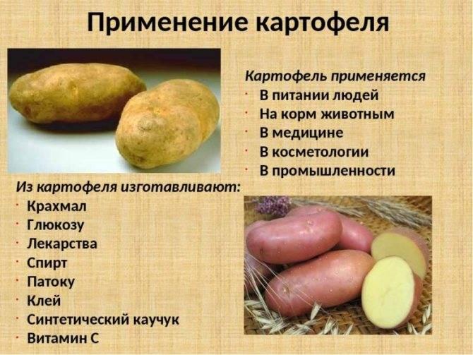 Картофель: полезные свойств и возможный вред | польза и вред