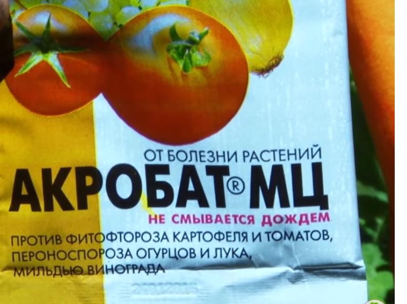 Как бороться с фитофторой томатов: народные средства и секреты