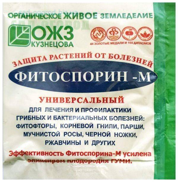 В чем замочить лук перед посадкой: как обработать марганцовкой, соленой водой, препаратами из магазина