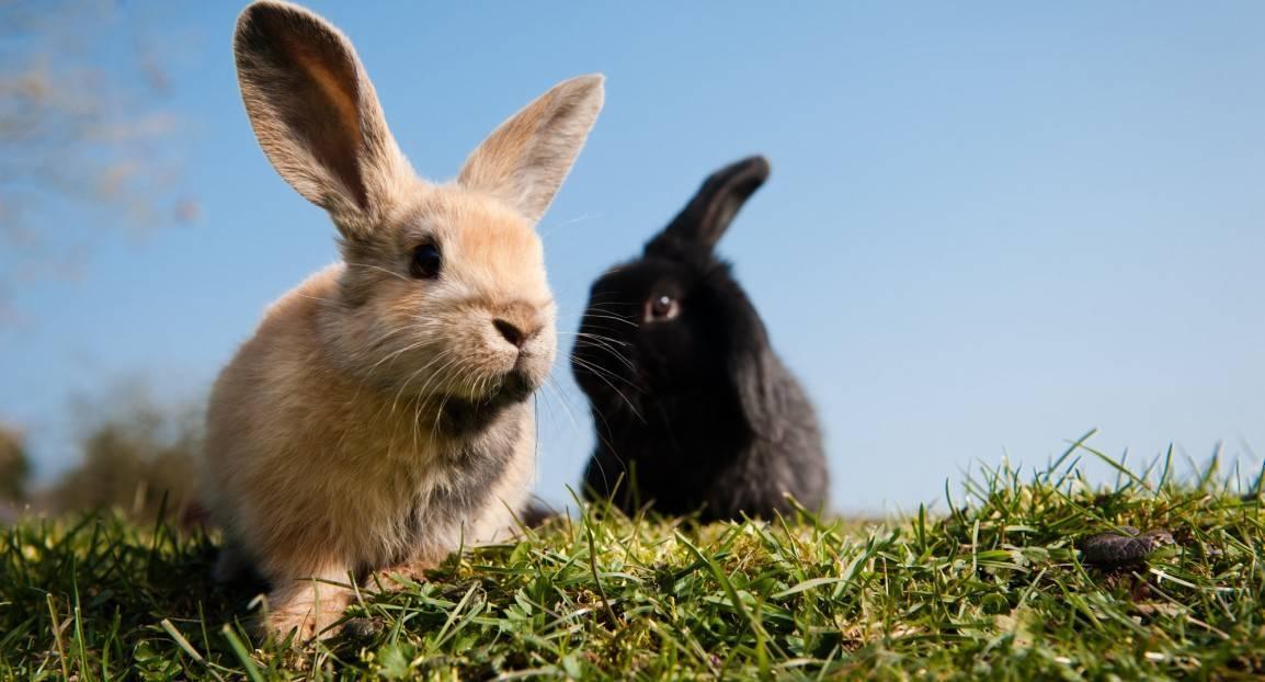 Топ-10 интересных фактов о кроликах — разбираемся вместе