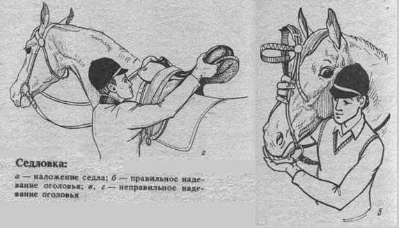 Азы седловки: как седлать и ездить верхом правильно