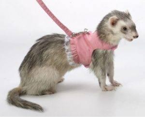 Шитье для животных: выкройки и описания одежды. как сшить своими руками для собак и кошек.