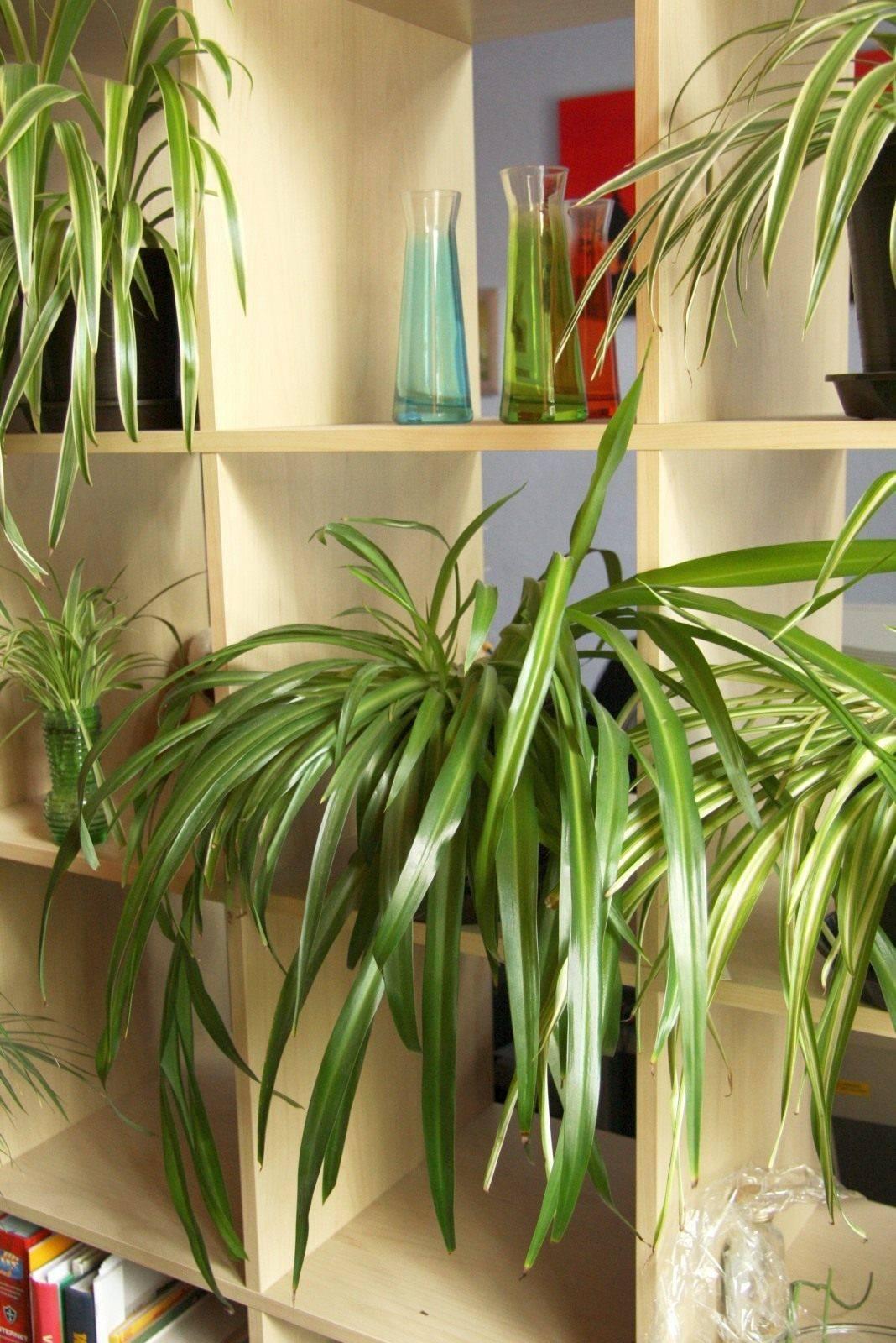 Неприхотливые комнатные растения: фото и названия, необходимый уход, особенности выращивания - sadovnikam.ru
