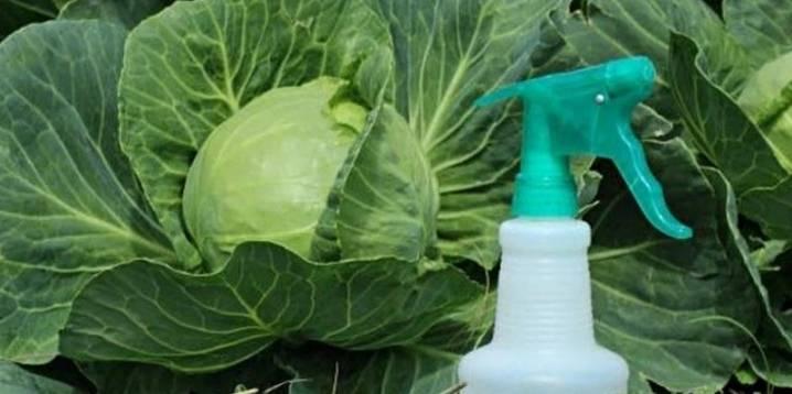 Эффективные препараты для обработки капусты
