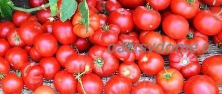 Когда сажать помидоры на рассаду в 2021 году в сибири: расчет благоприятных дней с учетом особенностей региона и лунных фаз