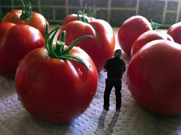 К чему снится помидор. видеть во сне помидор - сонник дома солнца