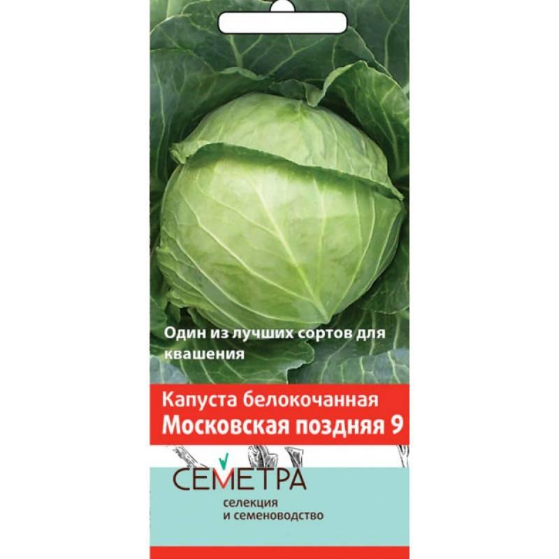 Сорт капусты московская поздняя: описание сорта, отзывы, фото
