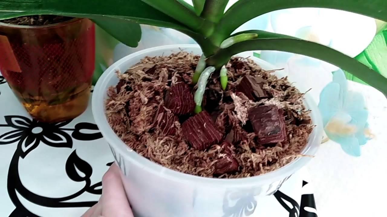 Кора для орхидей: из каких деревьев лучше брать (из сосны или ели), подготовка и обработка материала для посадки своими руками в домашних условияхдача эксперт