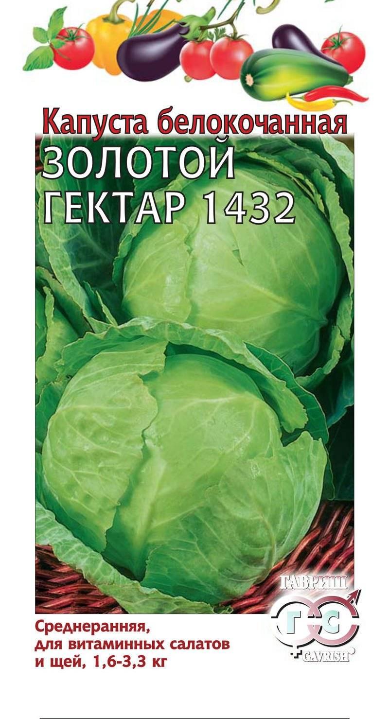 Капуста золотой гектар 1432: отзывы, фото, описание сорта, посадка и уход, выращивание