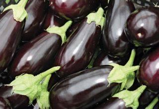 Раннеспелый и морозоустойчивый сорт баклажанов — король севера f1. описание, фото и нюансы выращивания