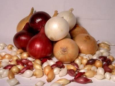 Чем и как обработать лук-севок перед посадкой от болезней и вредителей