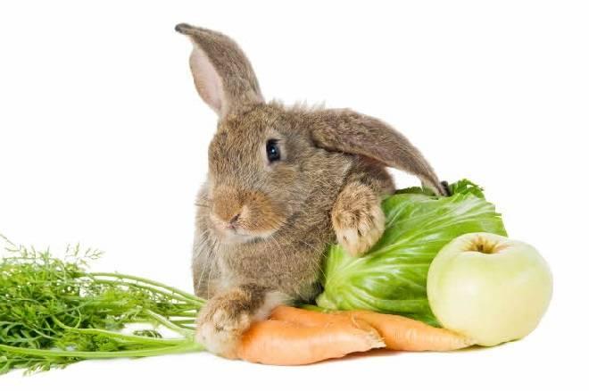 Можно ли давать кроликам капусту: польза или вред, правила кормления