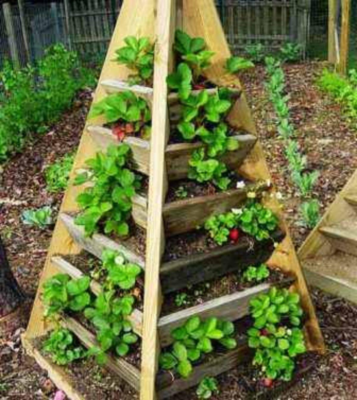 Выращивание клубники в пирамидах - моё село