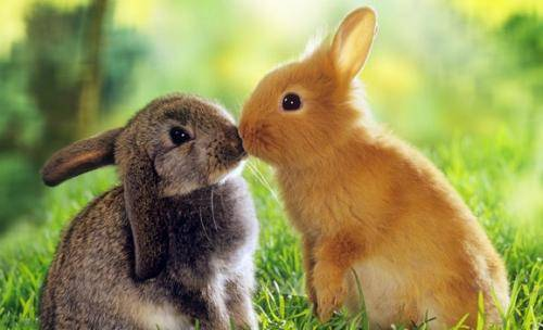 Самые интересные факты о кроликах самые интересные факты о кроликах